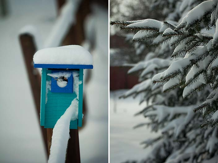 winterbluebirdbox