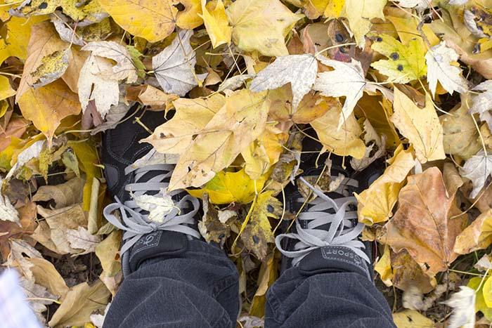 fall_leaves_1